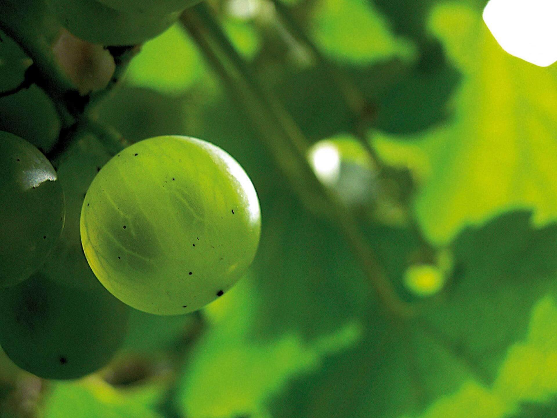 Les vignes selon les saisons